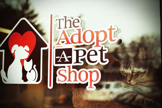 The Adopt 1.jpg