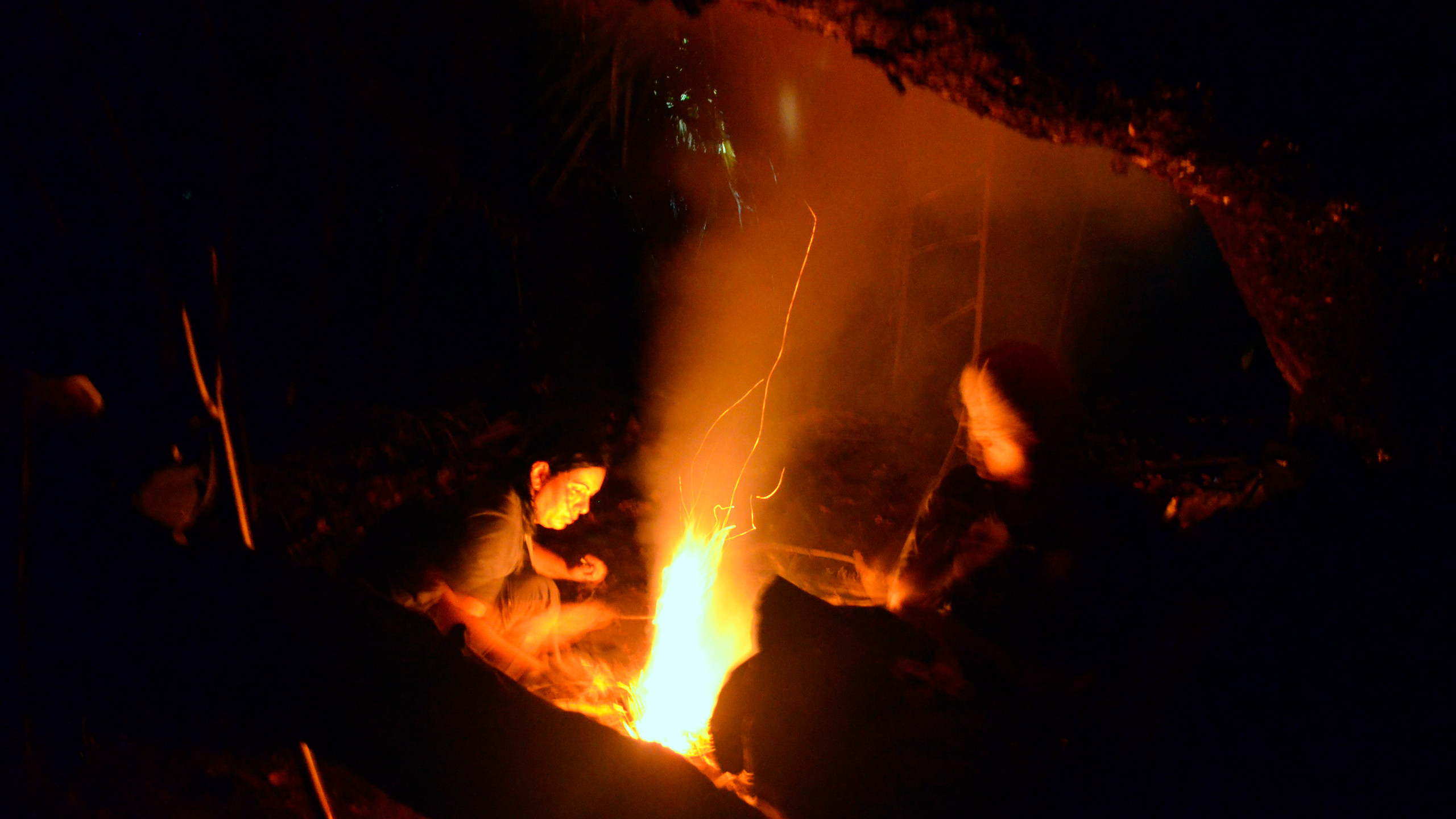 Noite de observação de fauna