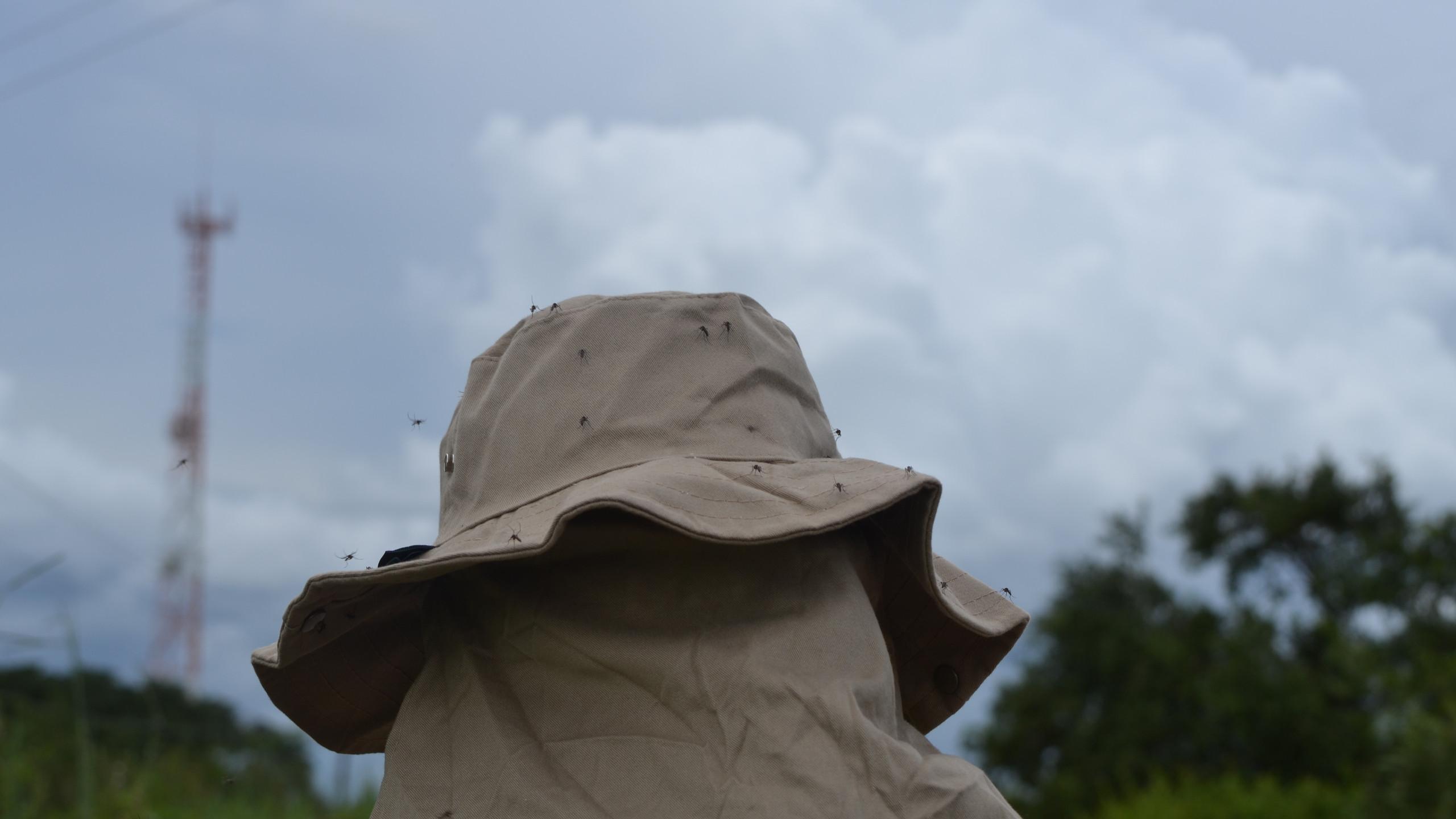 Imagina a quantidade de mosquitos