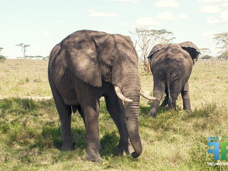 Expedição Gondwana África