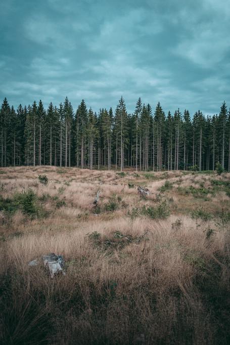 2020_Schweden_WWW.CHRISTOF-WOLF.COM_0793