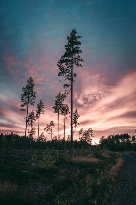 2020_Schweden_WWW.CHRISTOF-WOLF.COM_2702