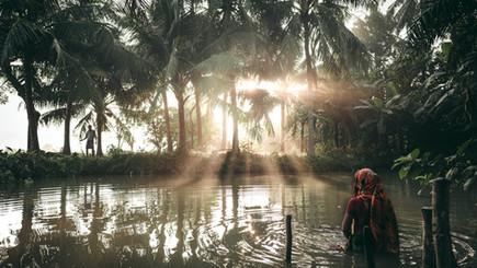 Lebensraum Mangrovenwald