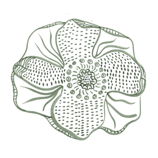 Illustration of an Anemone