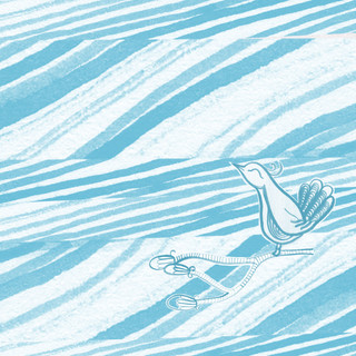 Bird Illustration for Textile Design