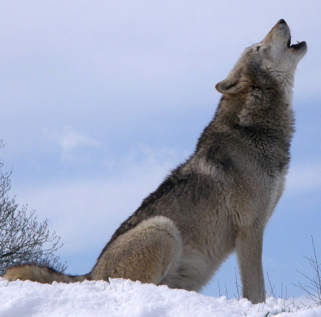 Wolfspark Merzig
