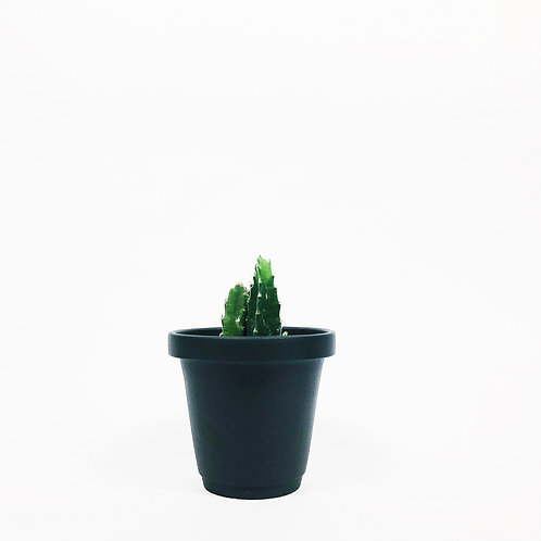 Matt Glaze Mini Plant Pot -Matt Black