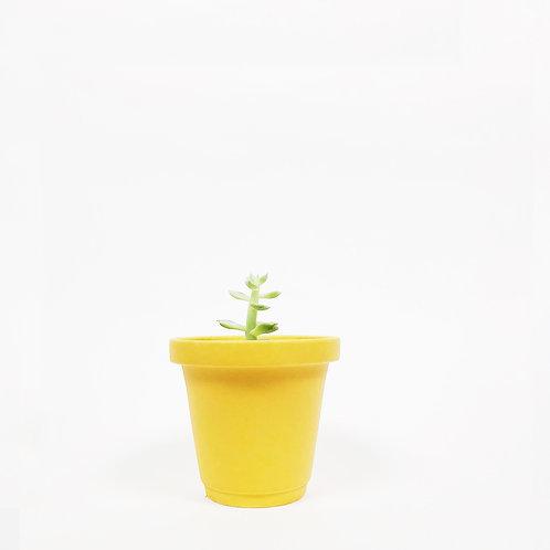Matt Glaze Mini Plant Pot -Mimosa Yellow