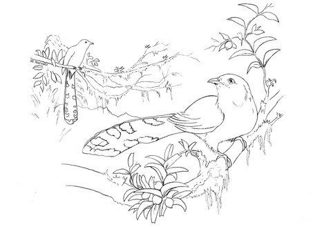 Dibujo 2.jpg