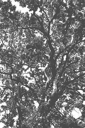 Forêt II, Minna Kokko