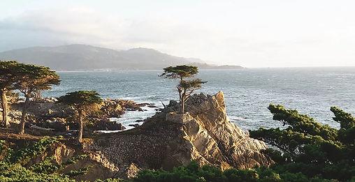 cypress_monterey_sml.jpg