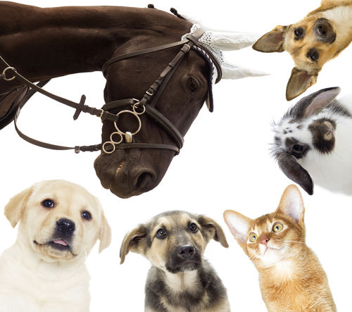 Kinesiology for Animals