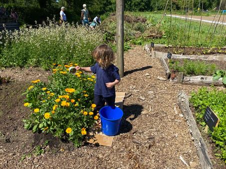Methodical plant watering