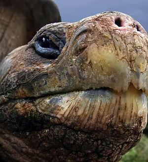 Galapagos-giant-turtle-tour-10-days-amaz