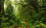 rainforest 2 (squoosh).jpg