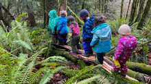 Nature Preschools' Impact on Young Children's Learning: The Research