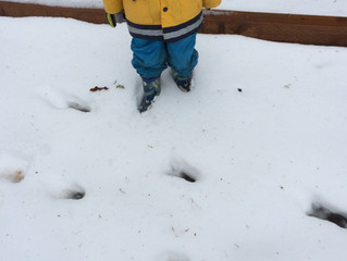 Winter Walks with Preschoolers
