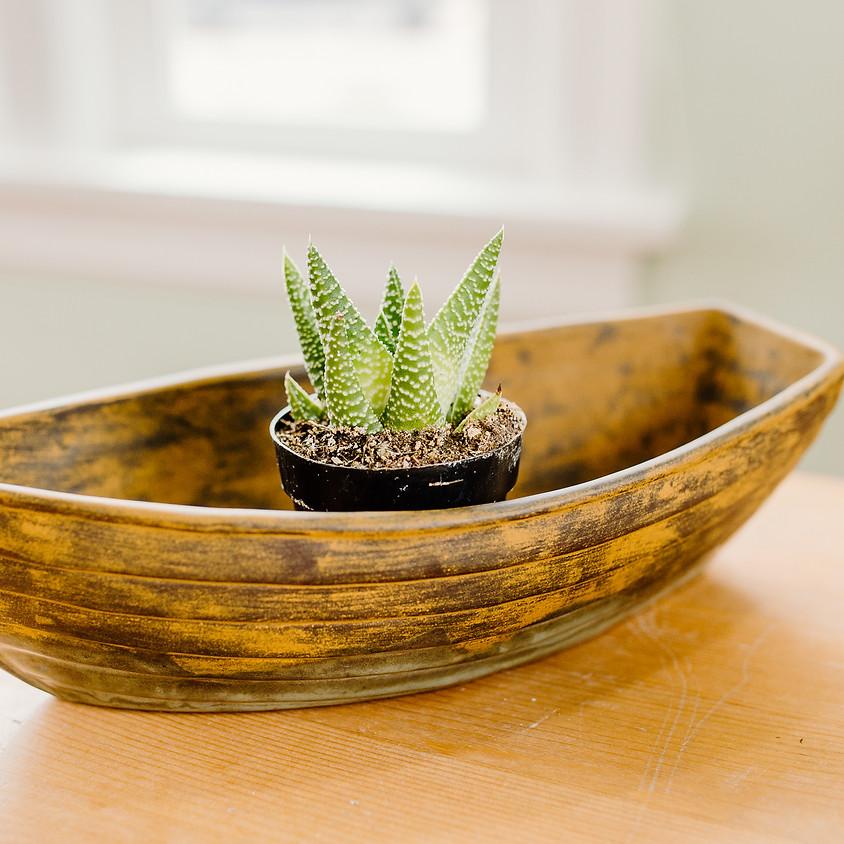 boat succulents