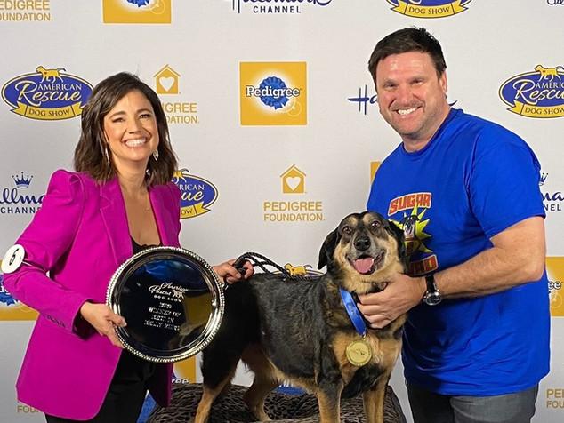 #SugarSquad - rescue & foster dogs