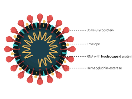 Welchen Effekt habenMutationenauf die Zuverlässigkeit von COVID-19 Antigen Schnelltests?