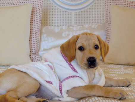 """Jet Set with """"The Pet Set"""" at Belmond this Chinese year of the Dog"""