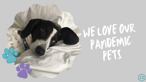 We Love Our Pandemic Pets