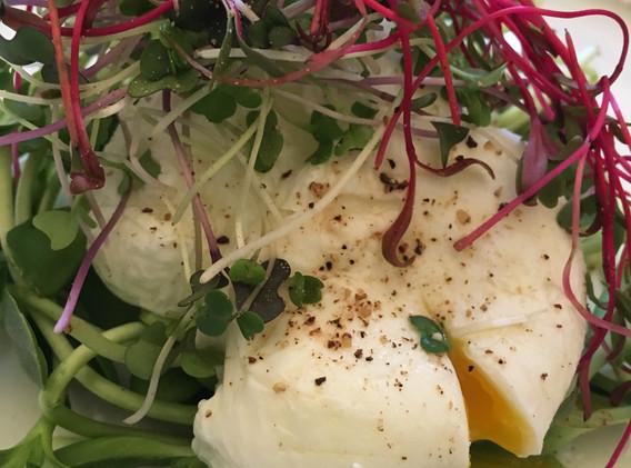 Poached Egg w Beet, Radish, Sunflower Mi