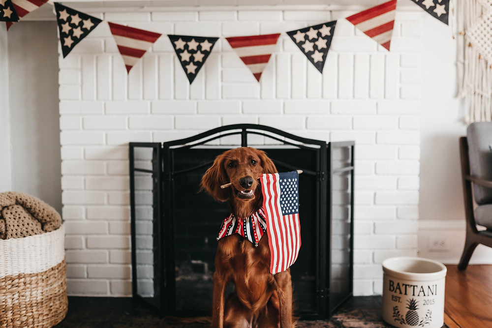 dog holding an American flag with a flag banner behind him