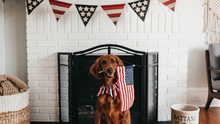 Five Dos and Don'ts for Pet Owners this Independence Day