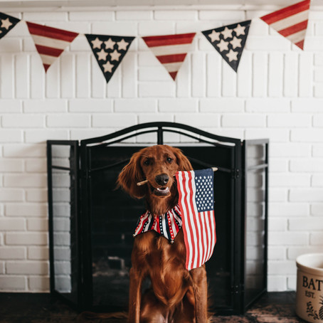 Pets and the 4th of July