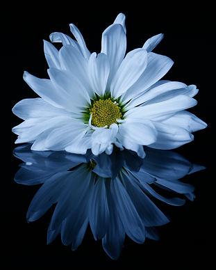 flowersinstudiolighting.jpg