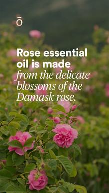 Rose Sourcing Story 3.jpg