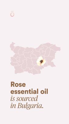Rose Sourcing Story.jpg