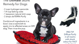 The Ultimate Skunk Remedy: For Dogs