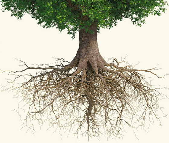 Do The Root Work!