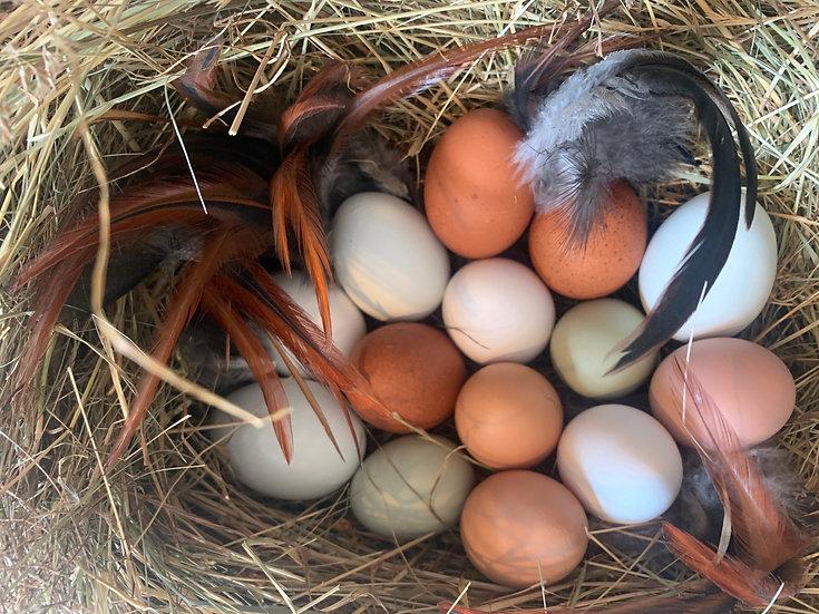 10 Stk. frische, natürlich bunte Bio Eier