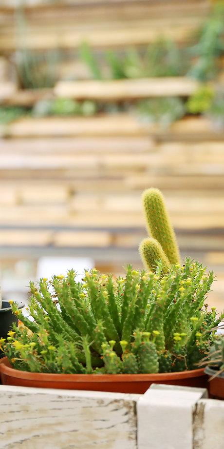 Assortiment van Planten