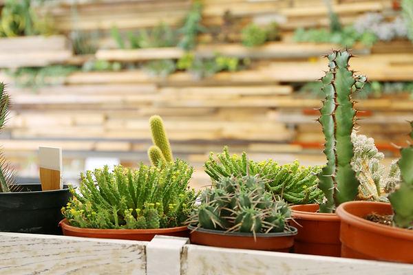 Auswahl von Pflanzen
