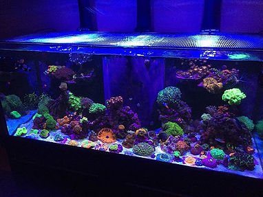 Gorgeous fts from one of our customers!