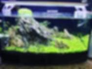 Planted display tank..jpg