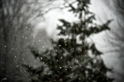 Day21_Snow Blind_January21