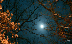 Jan 17_Winter Moon.jpg