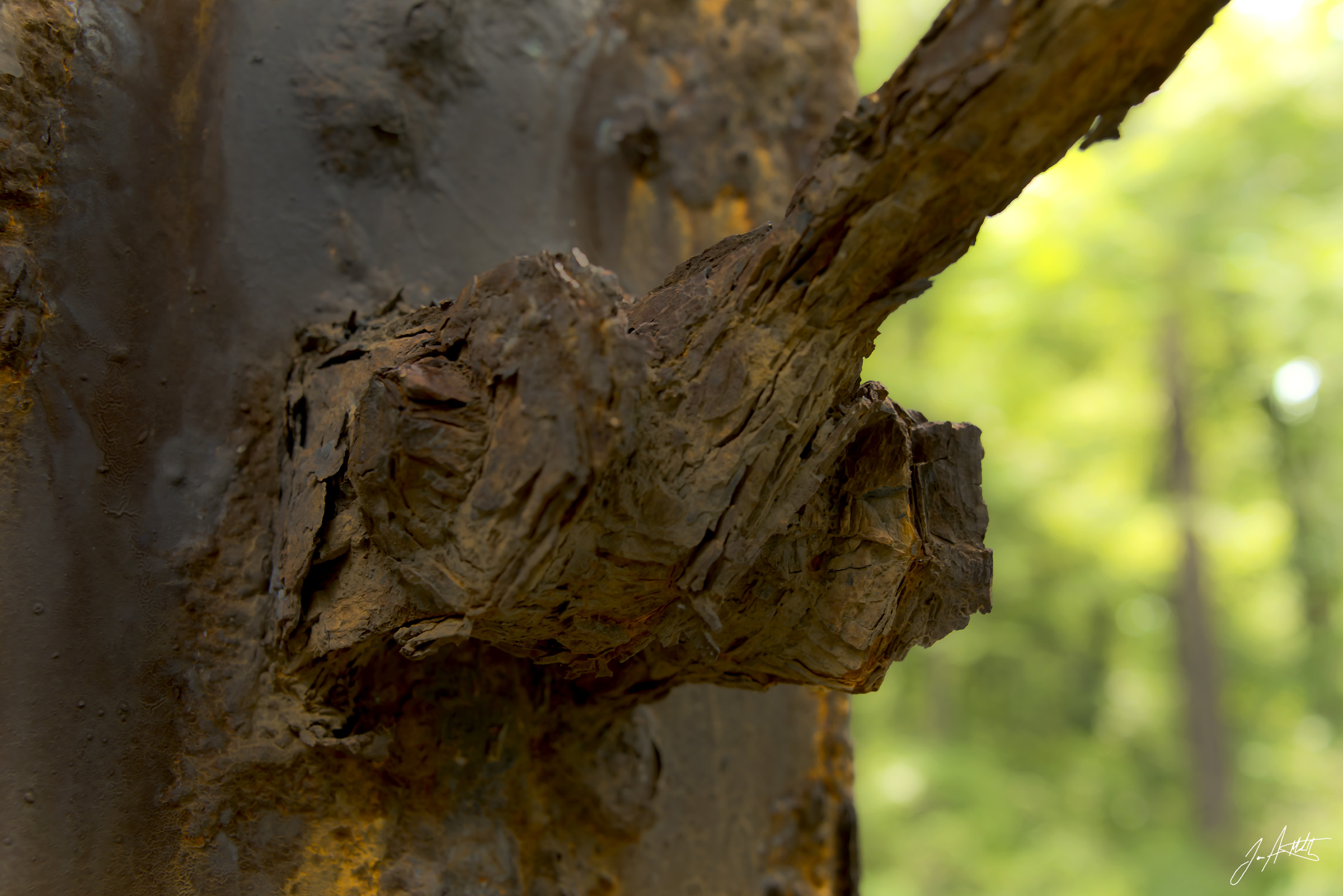 Day223_WoodenRust_August11