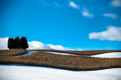 Day 16 Snow Fields