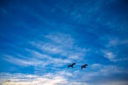 Day279_High Flying Bird_October6