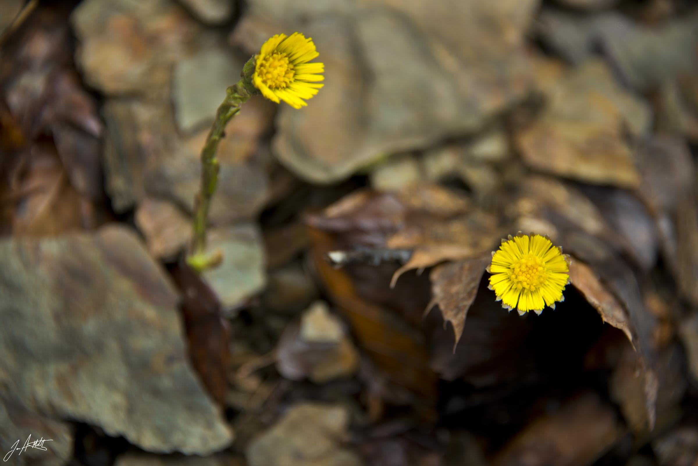 Day100_Spring_April 10