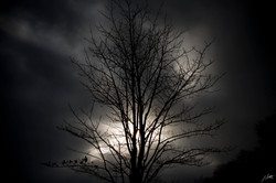 Day6_Stormy Winter Tree_January6