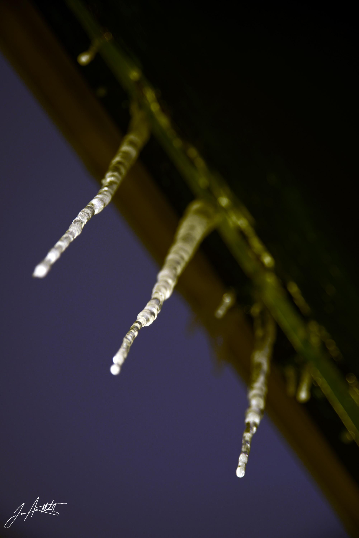Day 39_Glowing Ice_Feb 8 small.jpg