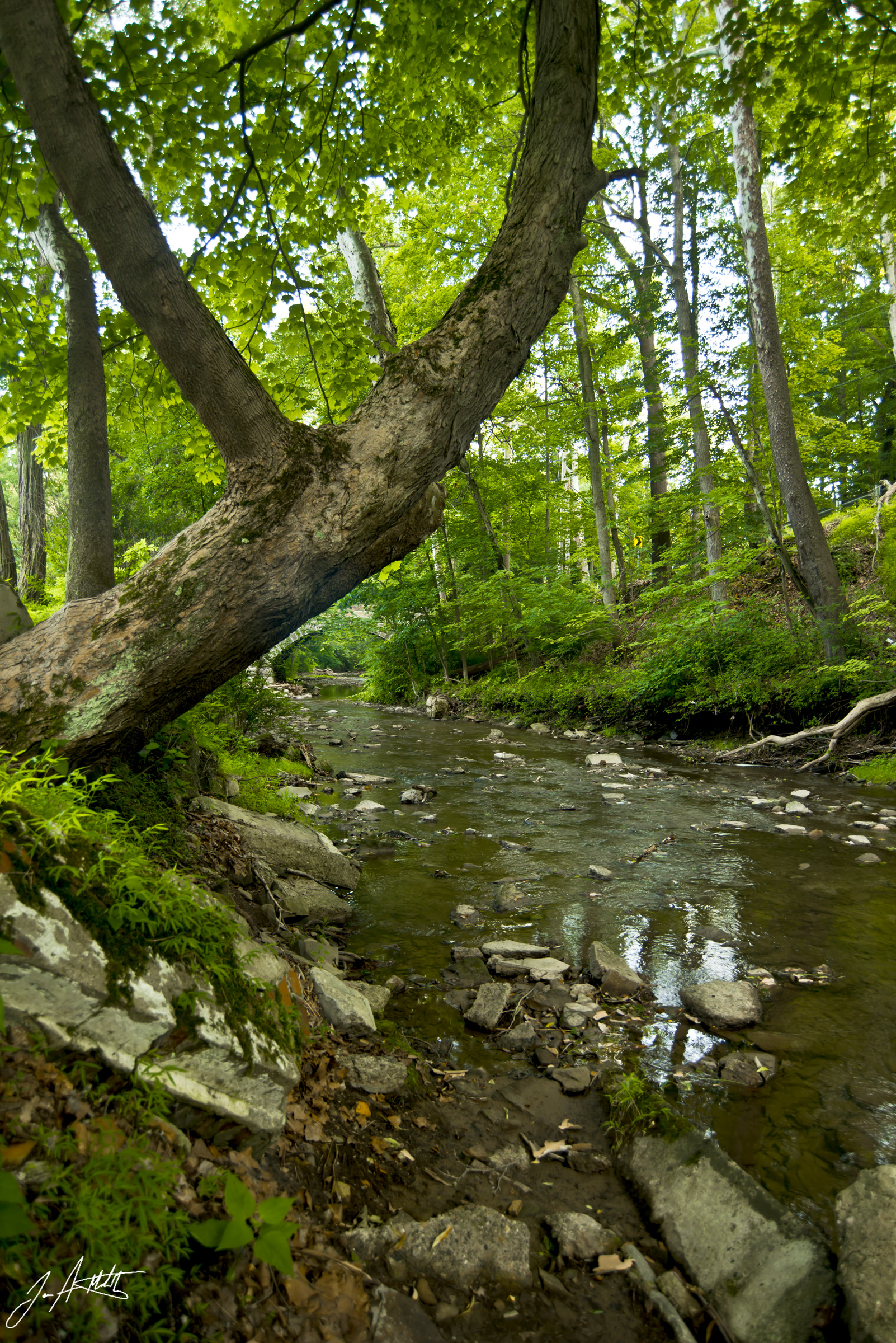 Day202_Little Sewickley Creek_July21