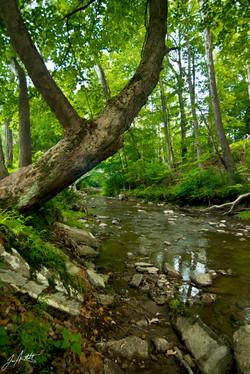 Day202_Little Sewickley Creek_July21